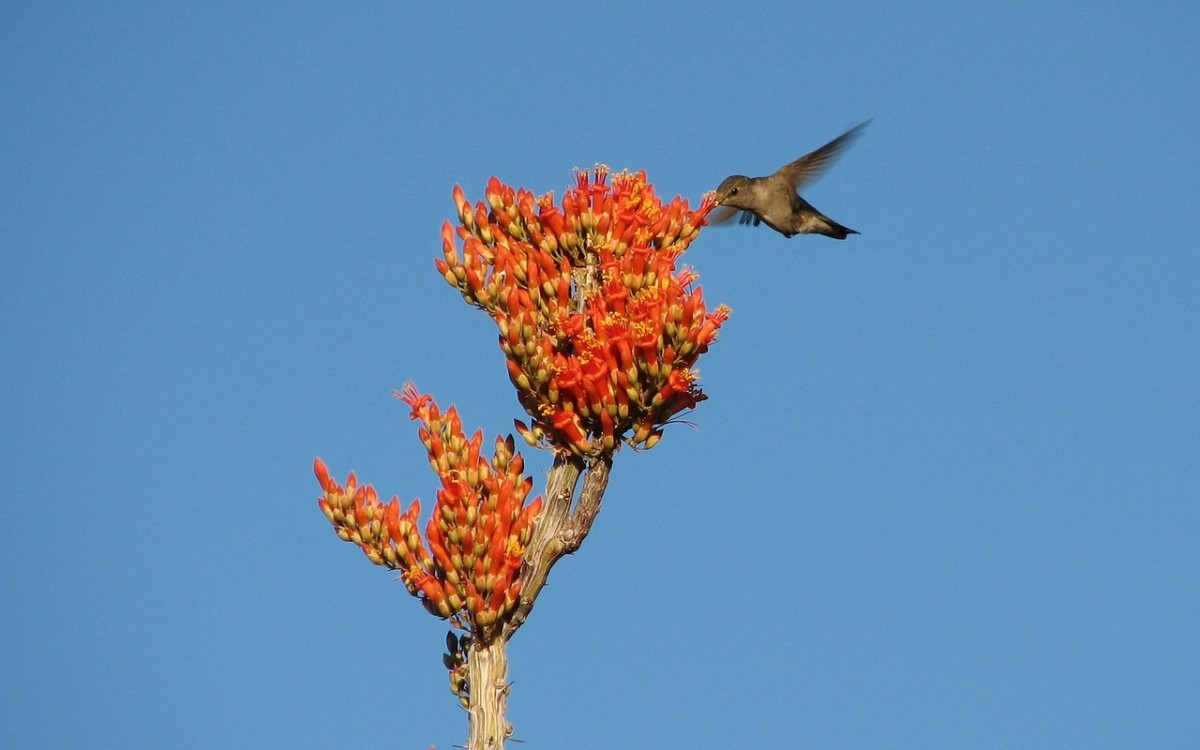 There are many flowers that attract hummingbirds.