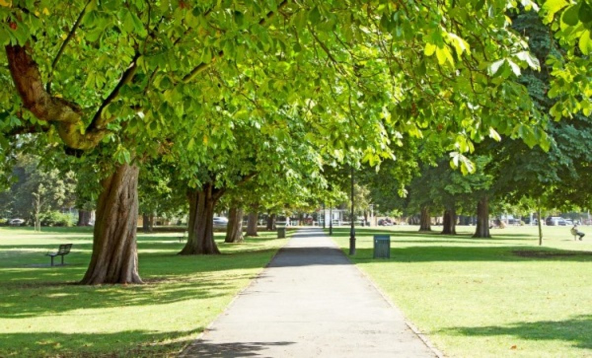A Guide for Residential Tree Owners in the London Borough of Ealing