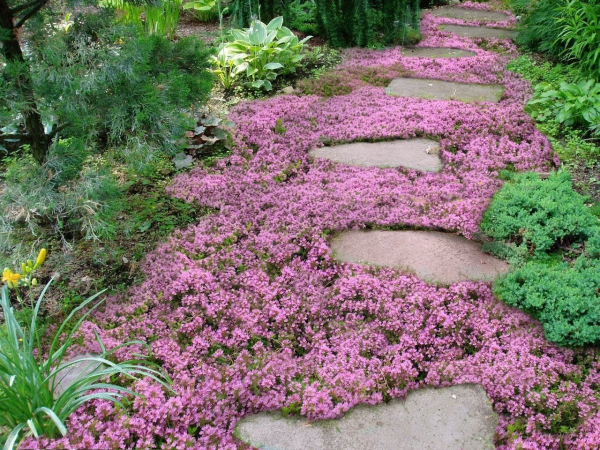 Ground Coverings Bring Romance to the Garden