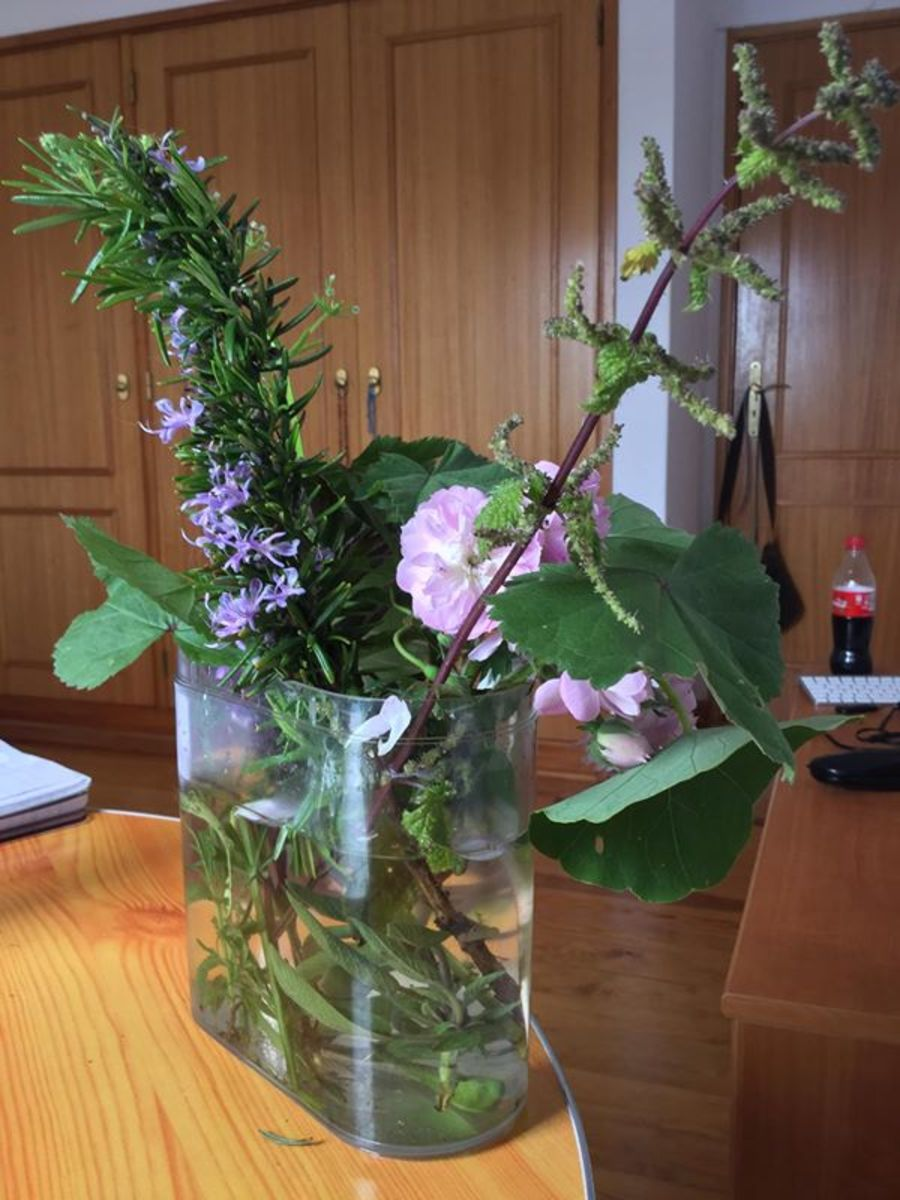 Bunch of foraged edible plants and flowers.