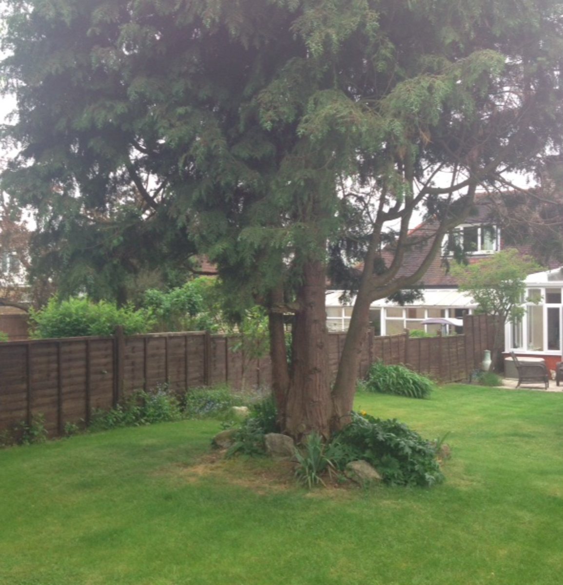 This is our trimmed leylandii from behind.