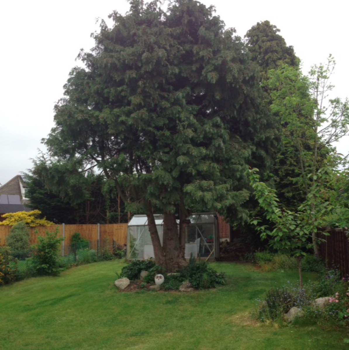 "This is the ""after"" shot of our fir tree. With all the lower branches removed, the garden is lighter and looks larger."