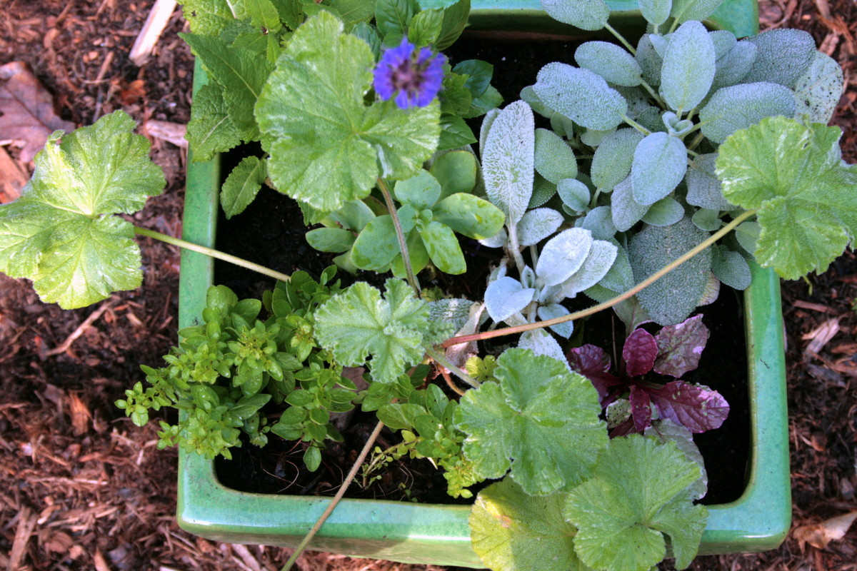 Radical Ideas for Mixed Container Gardens