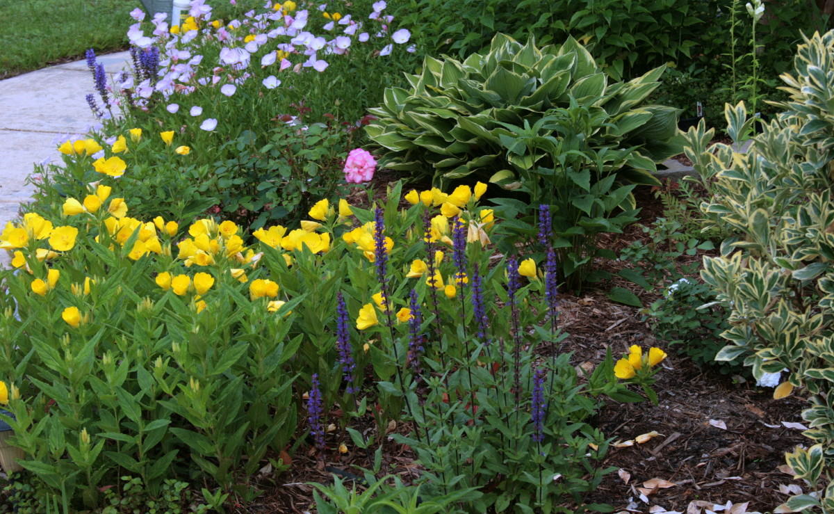 Except for two herbs from the Baltimore Herb Festival, I filled the pots with plants from our flowerbeds, including the purple salvia in the foreground..