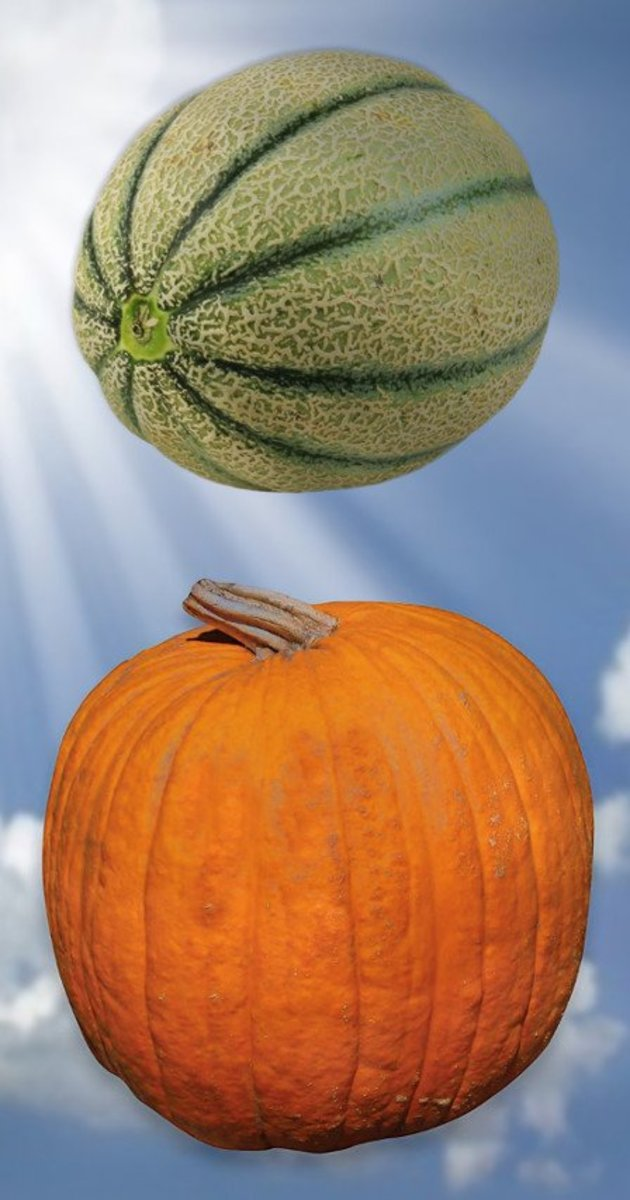 Photo of cantaloupe and pumpkin compiled by Robert G. Kernodle
