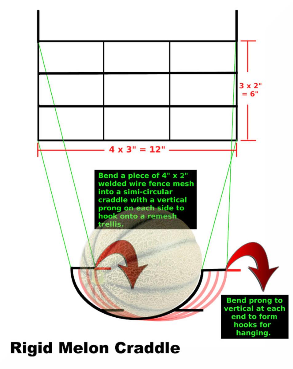 Diagram of rigid melon cradle by Robert G. Kernodle