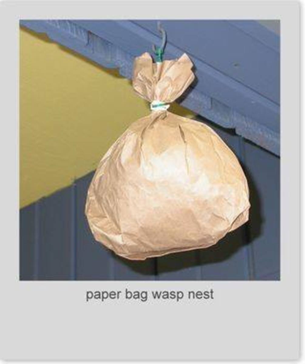A friend shared with me this tip: Fill a paper bag with newspaper and shape it like a wasp's nest. Hang it to deter them from returning to the spot.