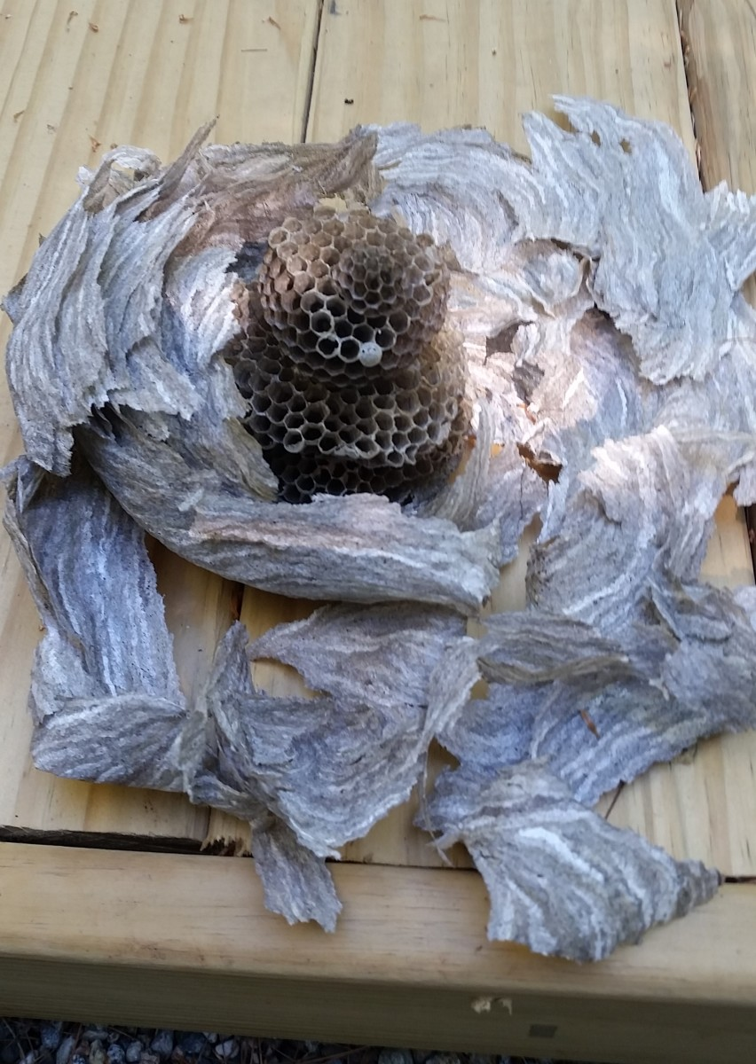 I sprayed the center part with wasp killer spray and waited. After seeing no activity, I assembled the parts to see how the nest looked.