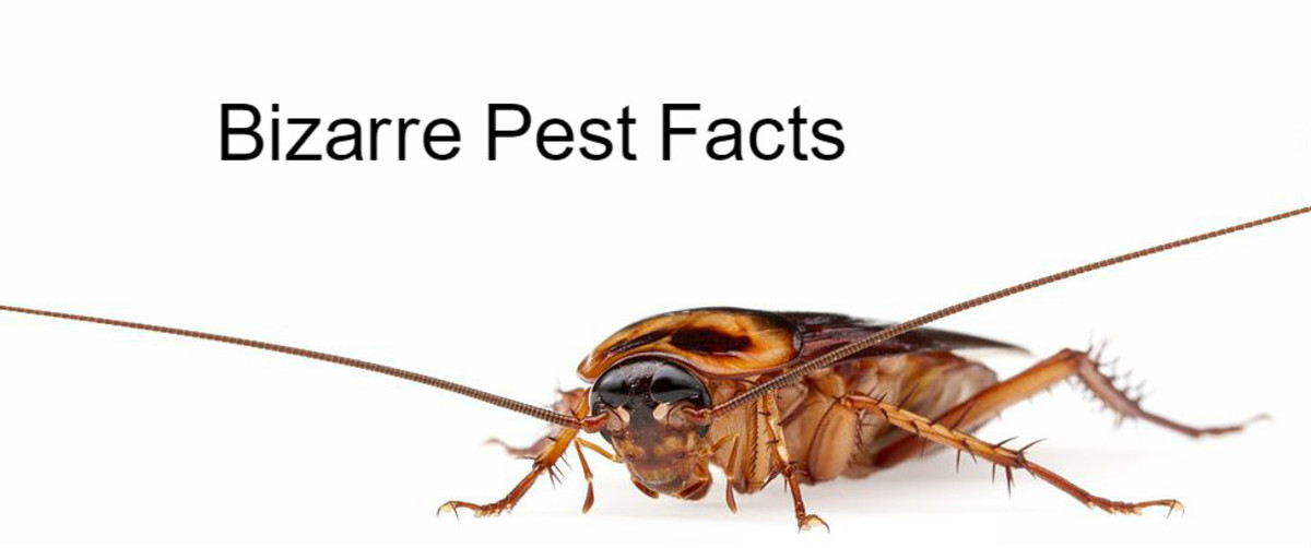 Bizarre And Useful Pest Facts