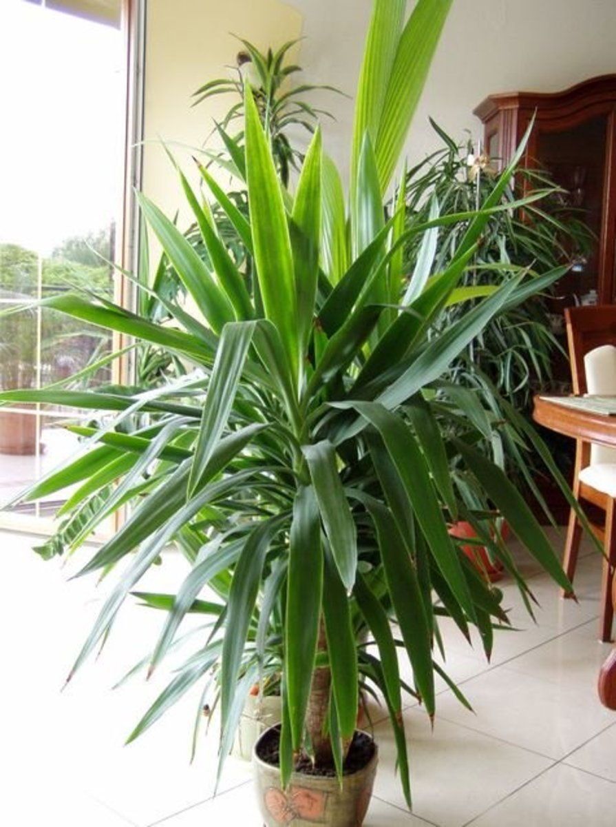 choosing an indoor palm  dengarden, Natural flower