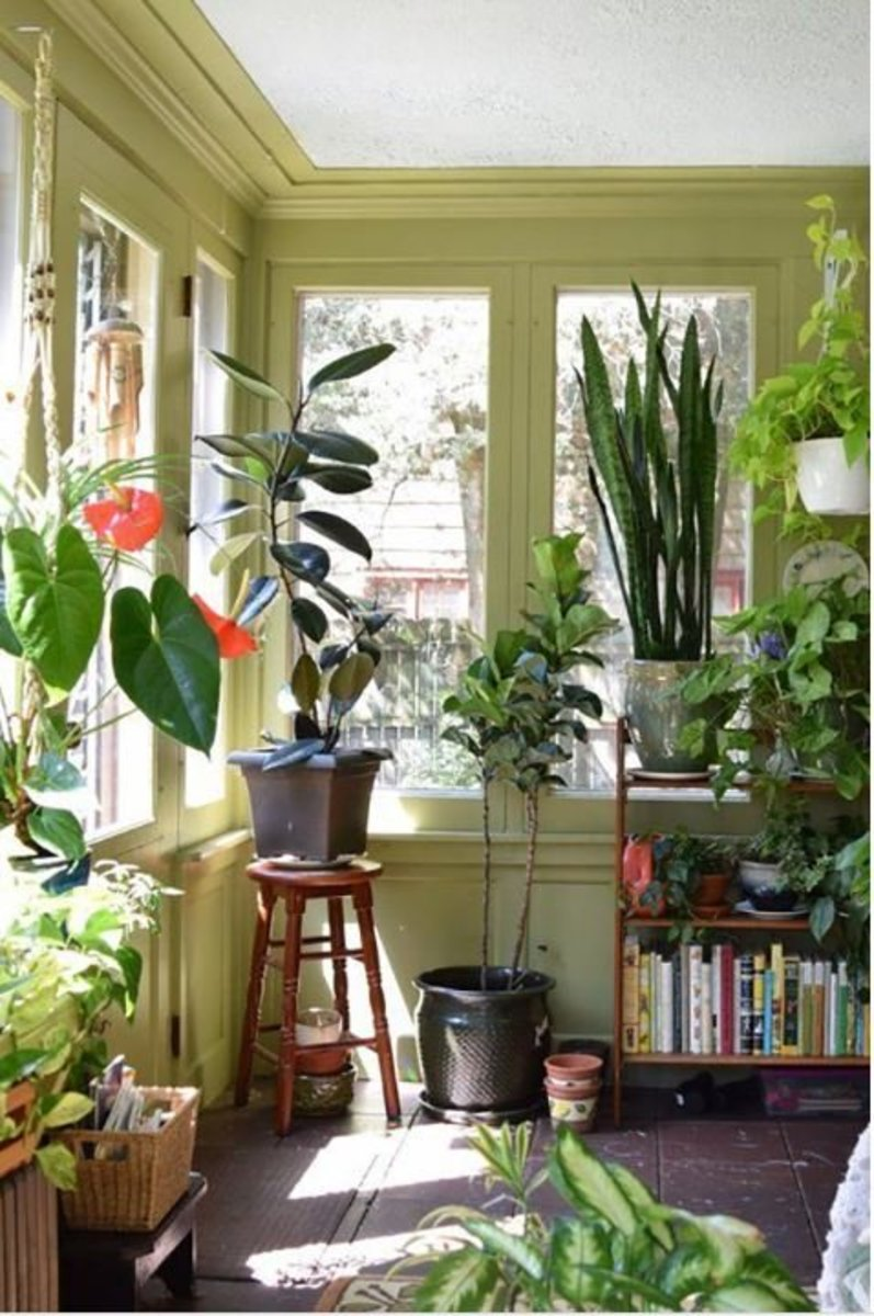 How to Safely Transport House Plants