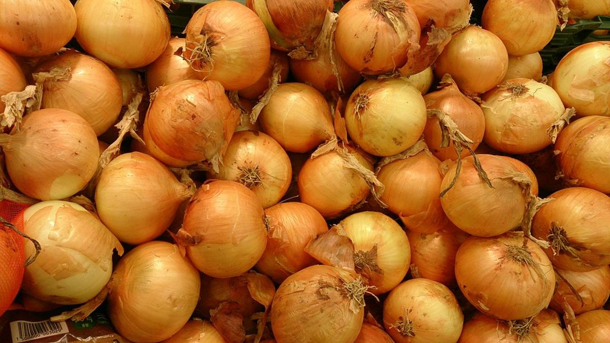 A Guide to Growing Onions