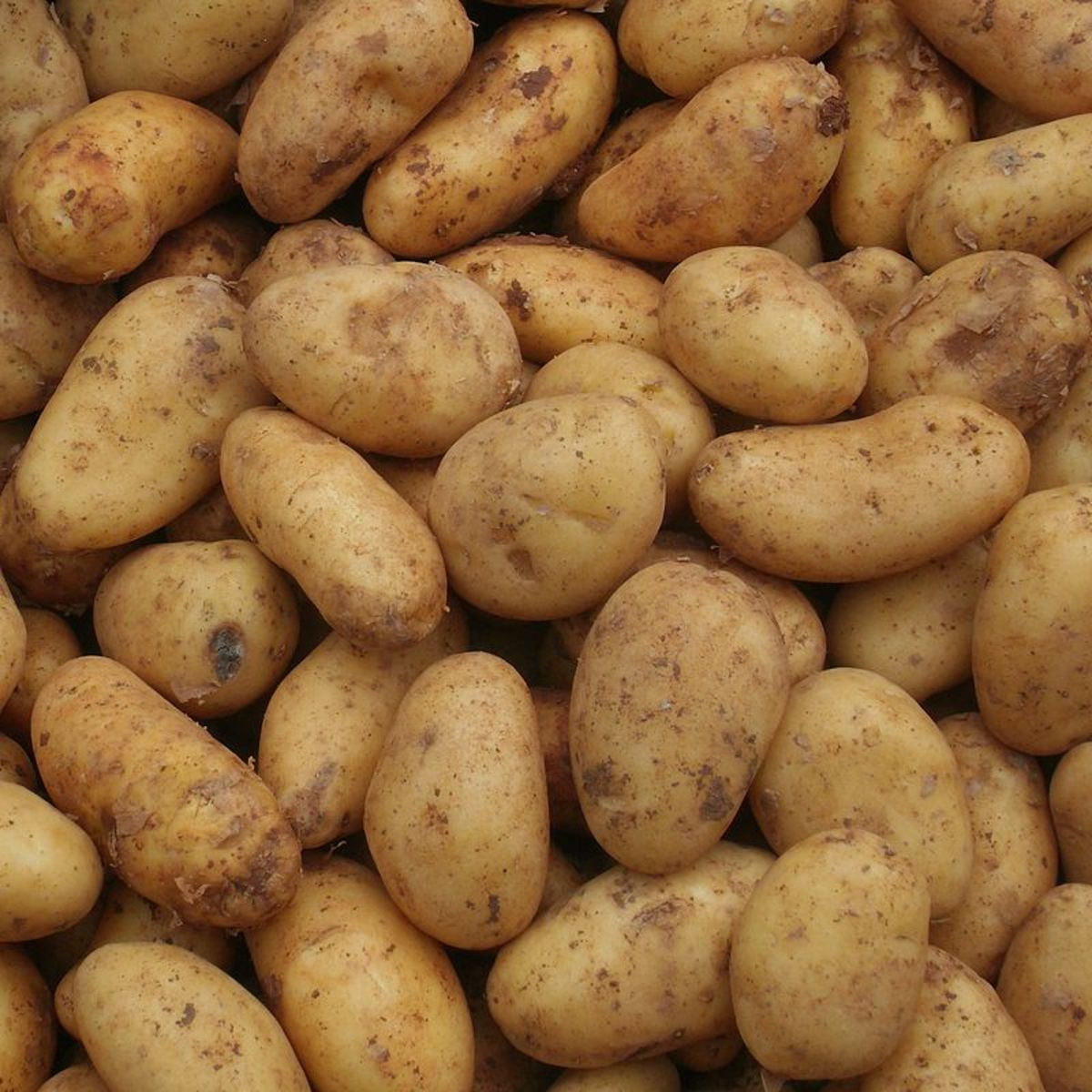 A Guide to Growing Potatoes