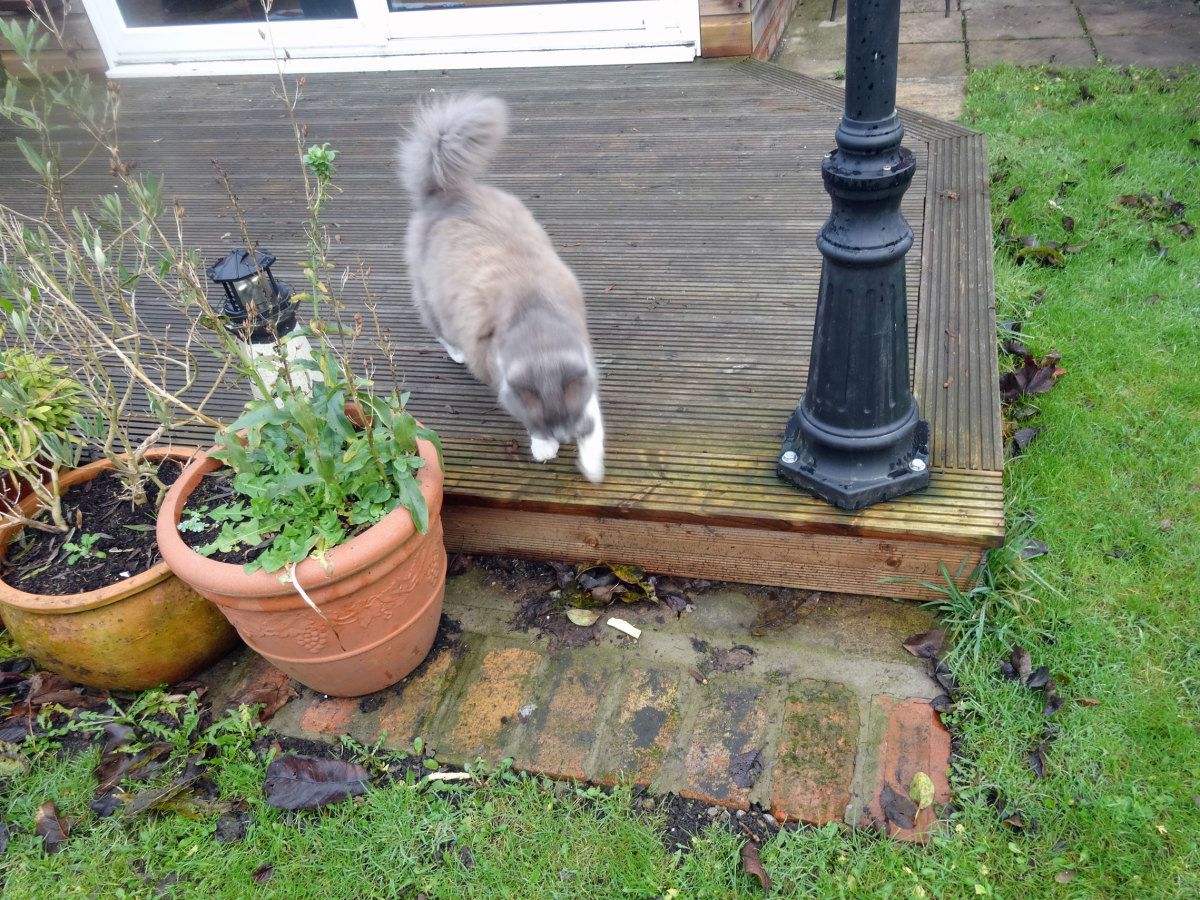 Our cat using the stepdown from our decking.