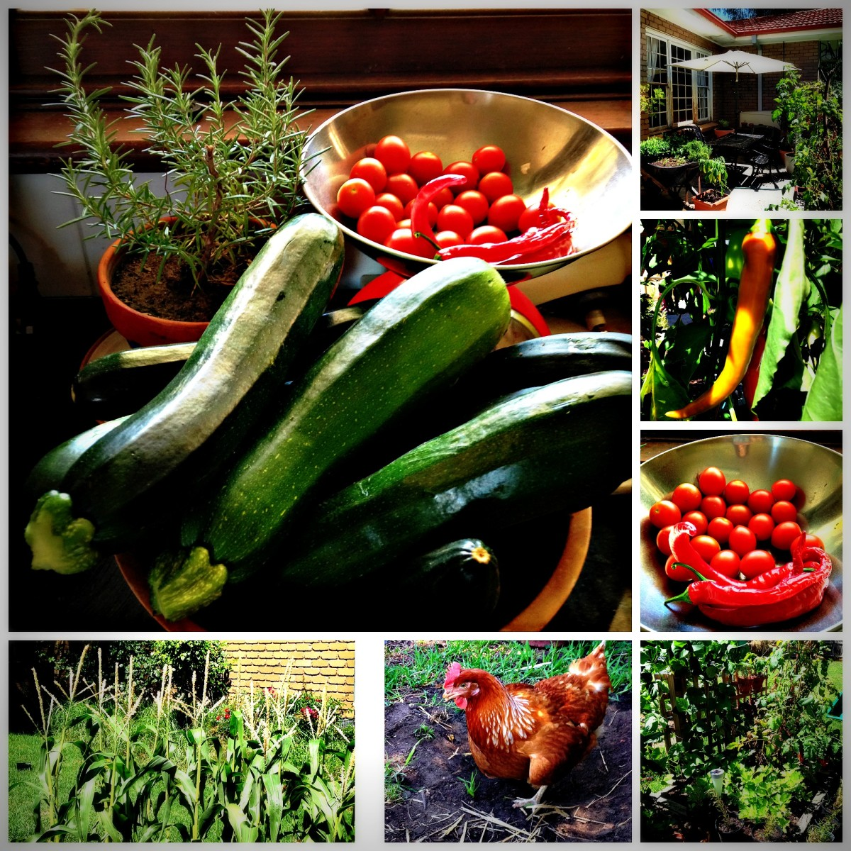 Growing Vegetables and Fruit Sustainably in Your Back Yard