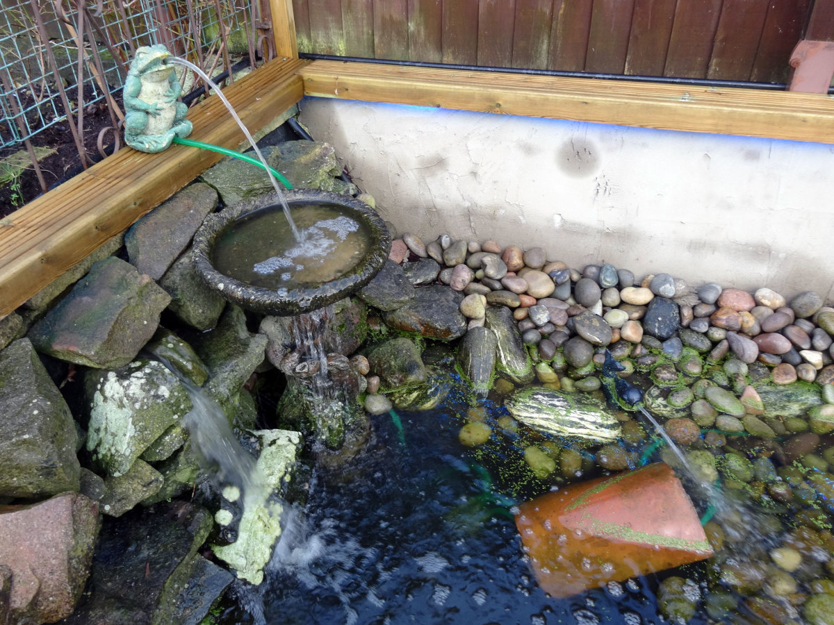 Frog feeding birdbath, new fish water feature and waterfall cascading over natural stones.