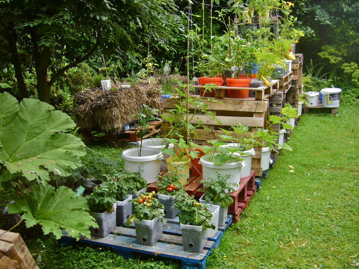 different-types-of-gardening-for-homesteaders