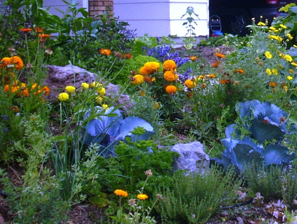 Designing a Color Palette for Your Edible Landscape
