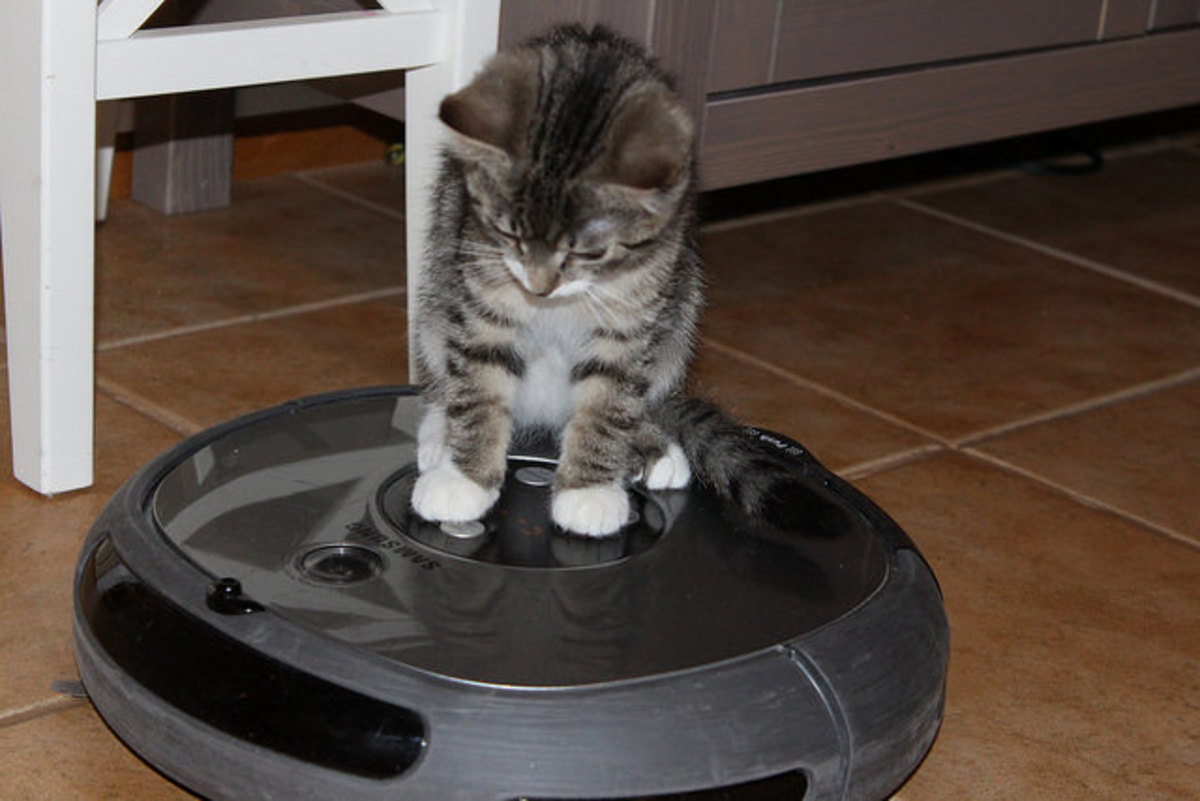 Robotic vacuum technology is the ultimate, but you probably shouldn't let your cat do this.