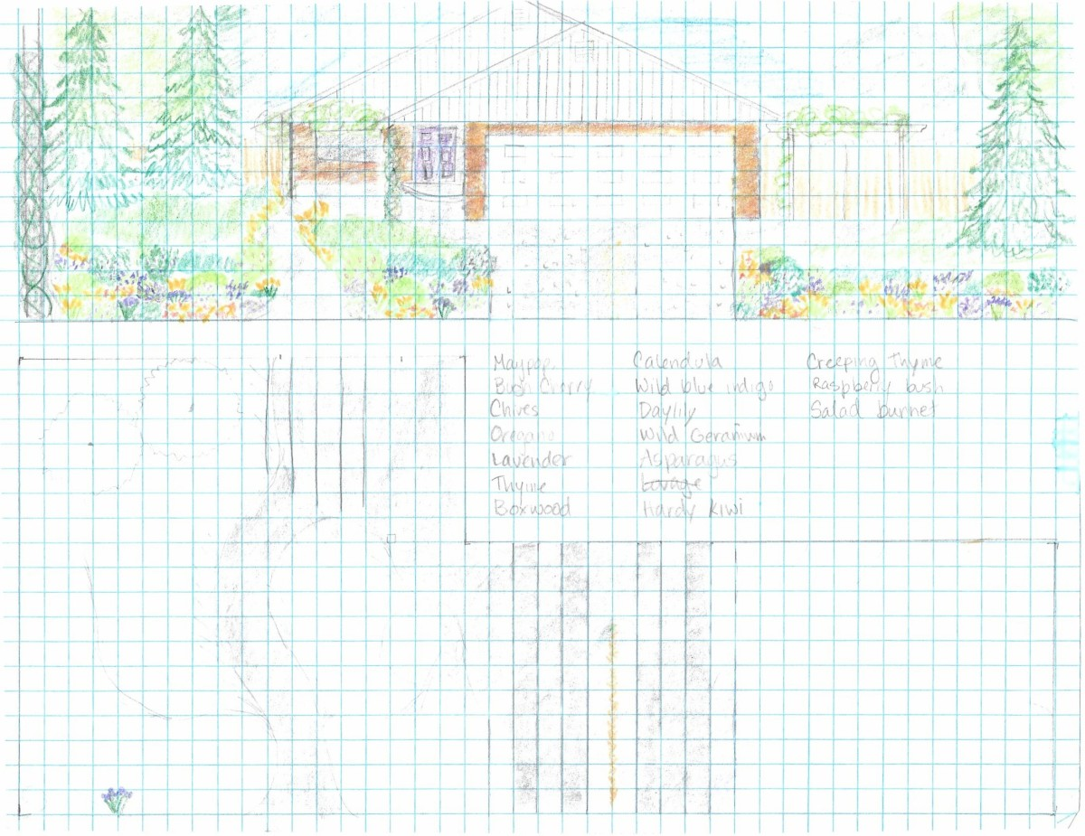 Of the many plans I made up.  This is closest to what I eventually settled on, except I placed almond  and elderberry where the large conifers are in the drawing.