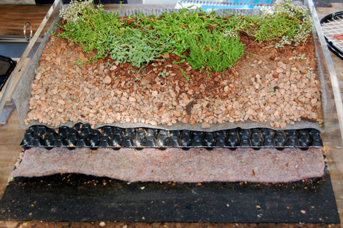 Sections of  a green roof with waffled drainage.