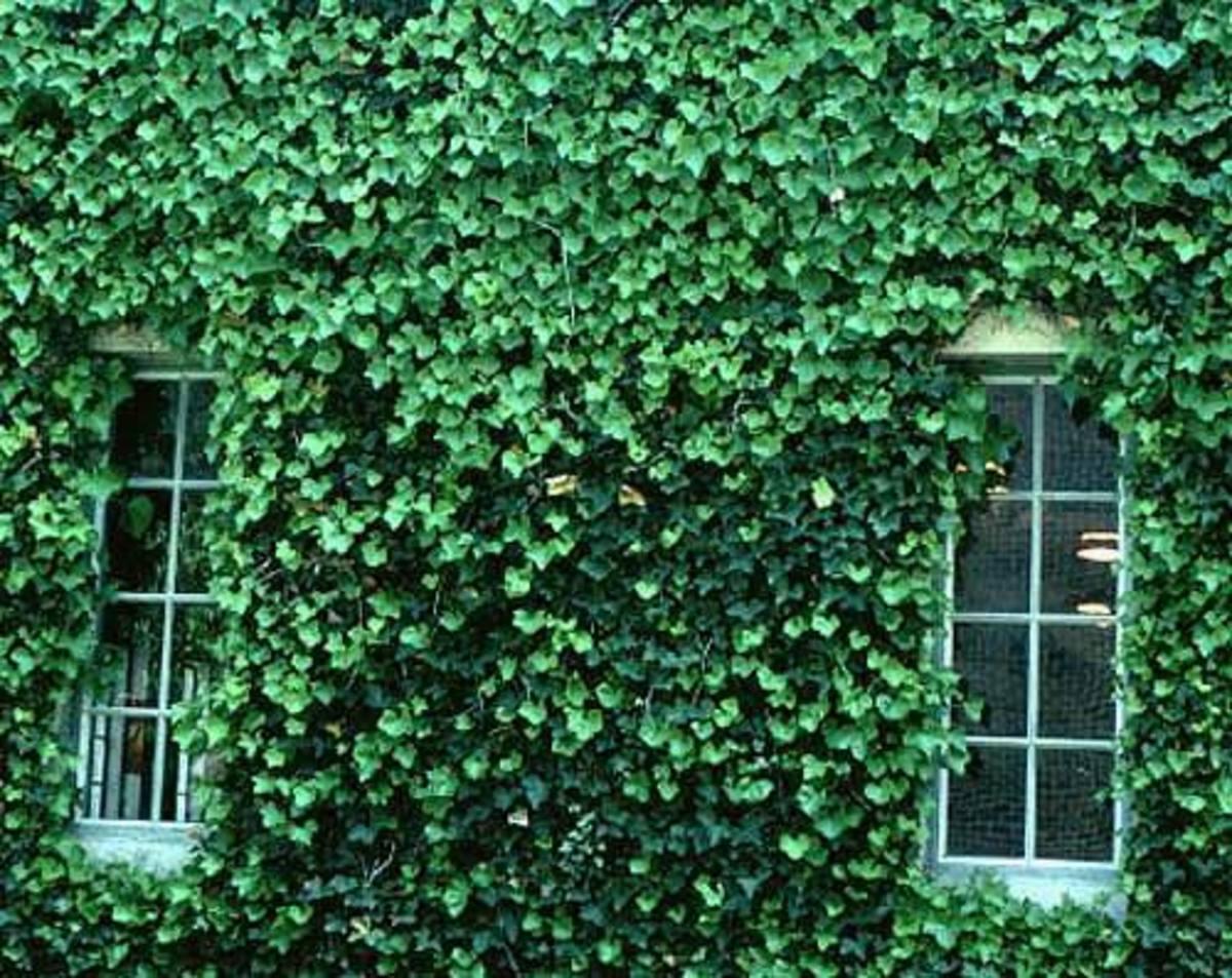 ten-great-plants-for-the-passive-aggressive-garden