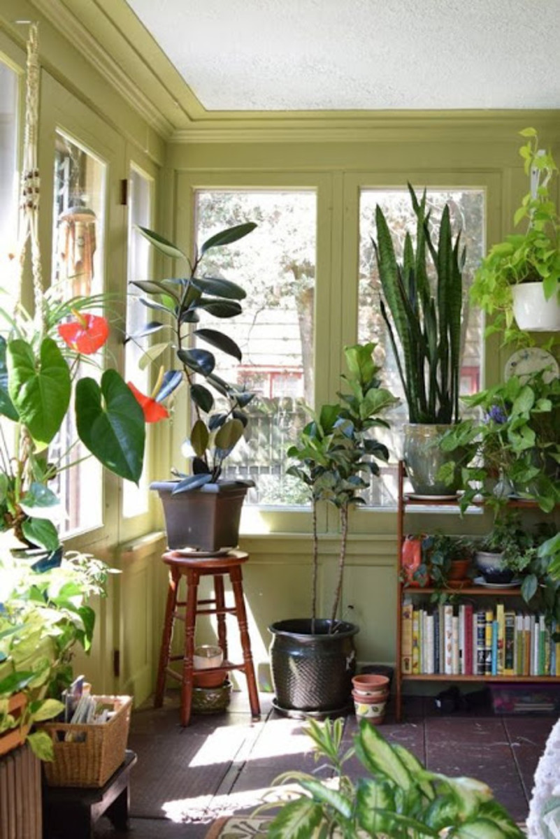 Plants are perfect for decoration and for improving the air in your home.