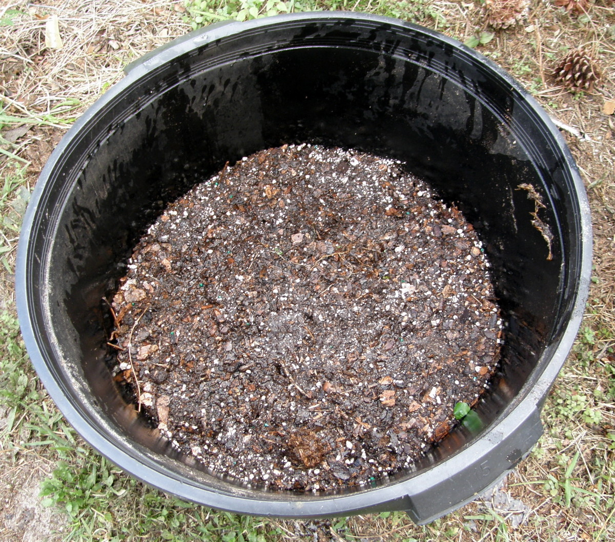Hill up the soil to cover the seed potatoes. They need a lot of sun, so place your basket where it will get at least six to eight hours of sunlight per day.