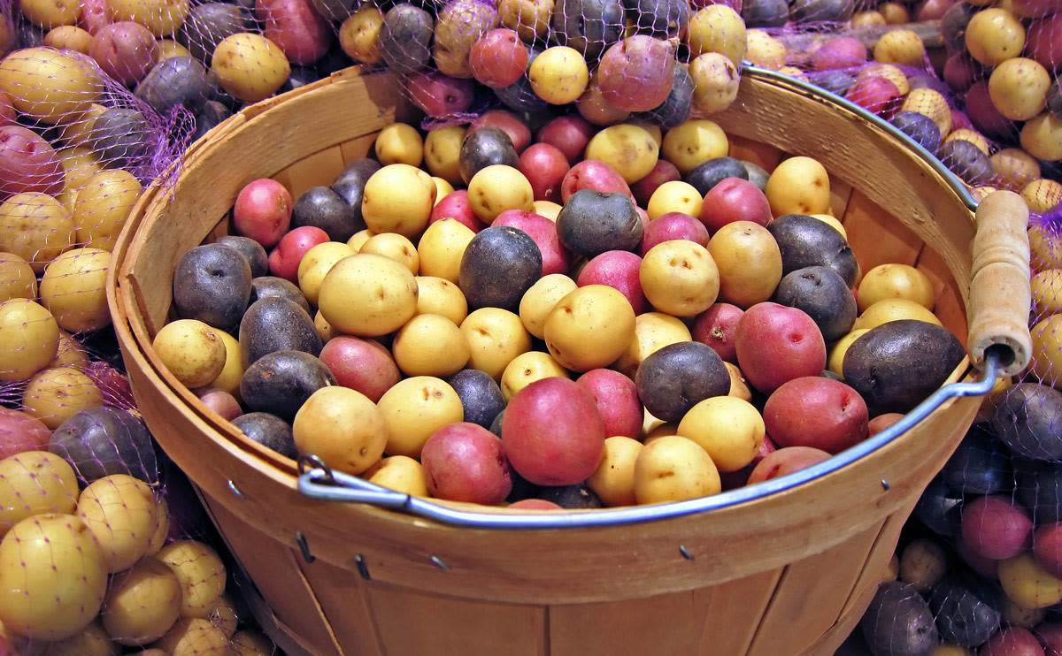 There Are Many Varieties of Irish Potatoes Available