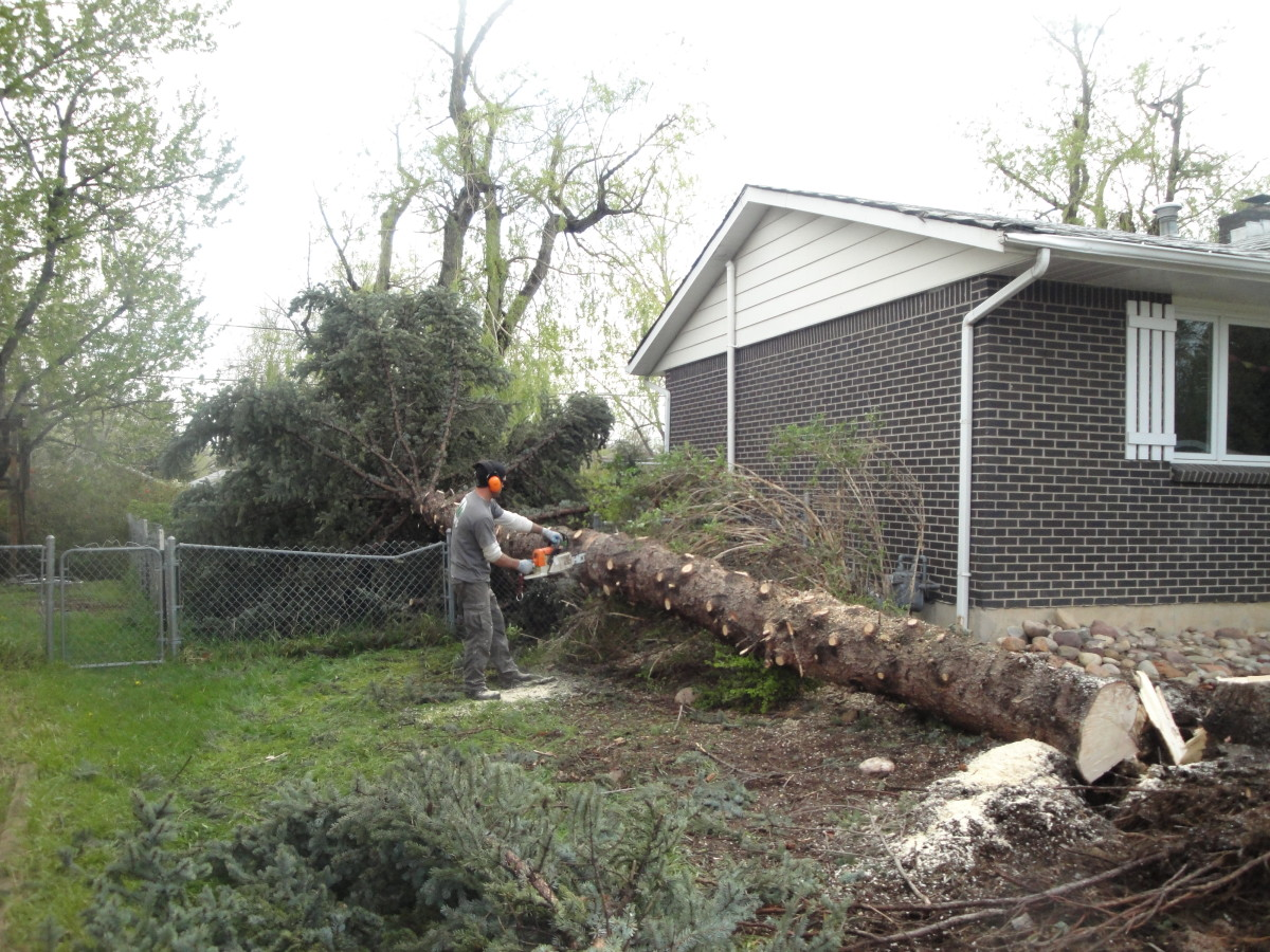Why it is Important to Remove Dangerous Trees From Your Yard