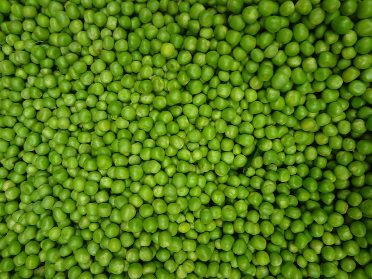 A Guide to Growing Peas
