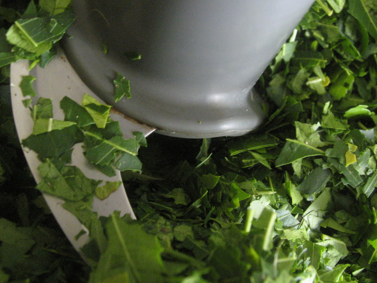 Cuttning neem leaves with a food processor