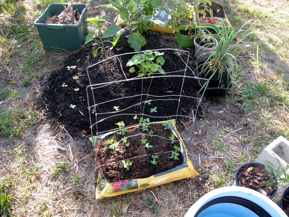 Make sure your bag is in an area where it gets the required light. Make a trellis, if necessary.