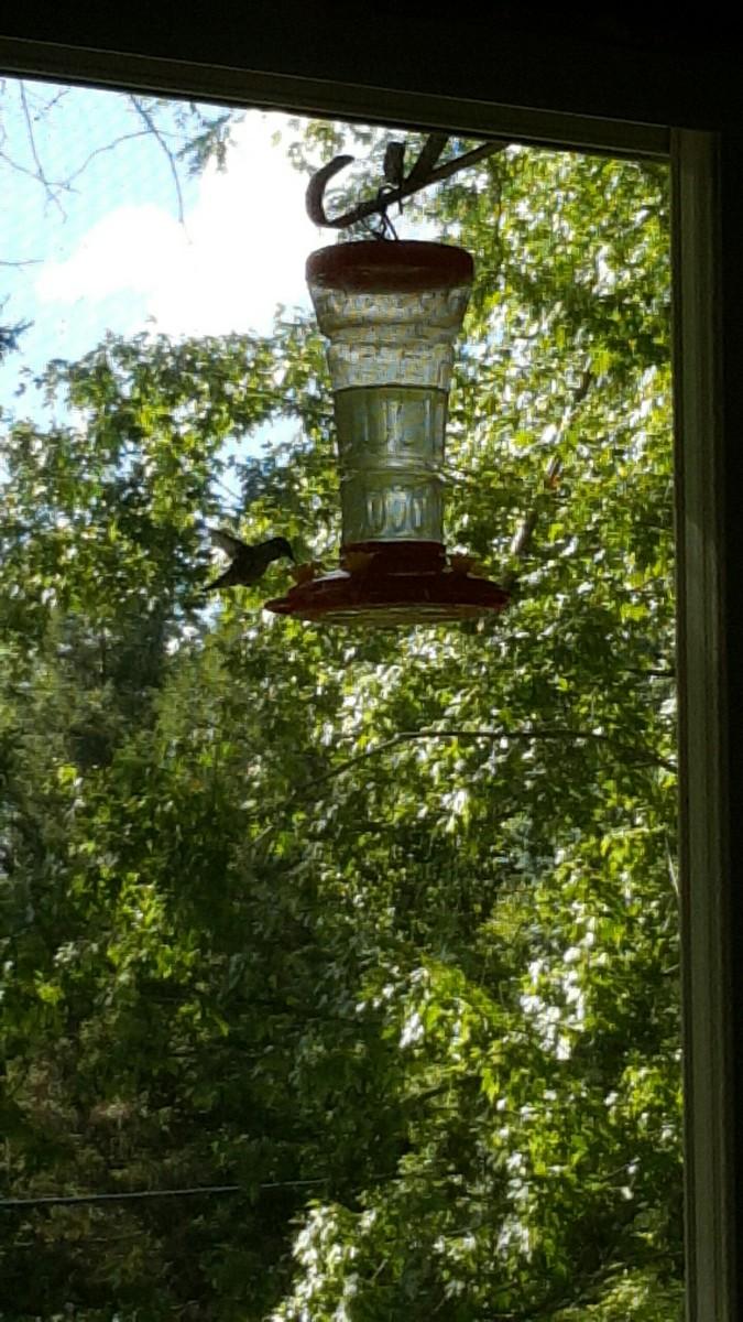 A hummingbird visiting our yard.