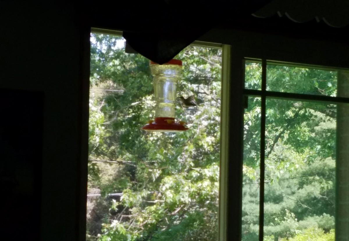 First hummingbird of the season.
