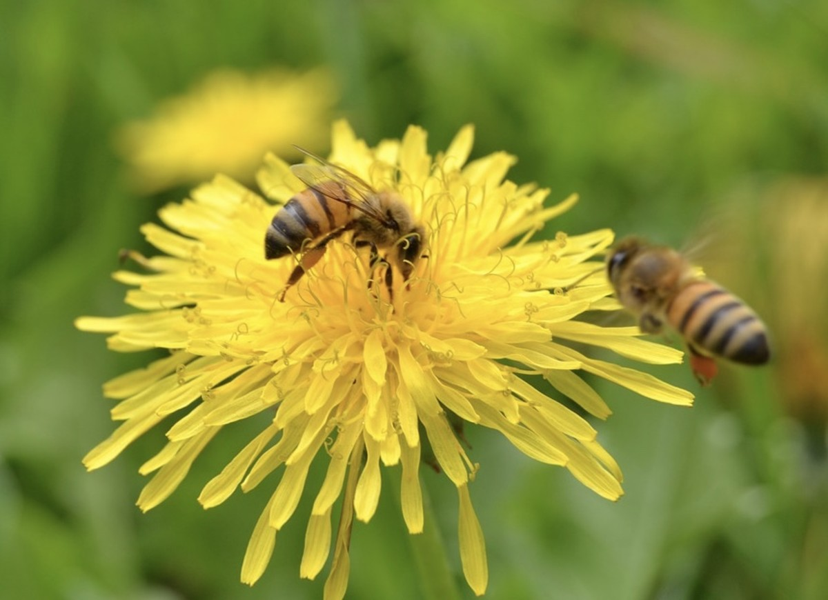 Bees love flowers.