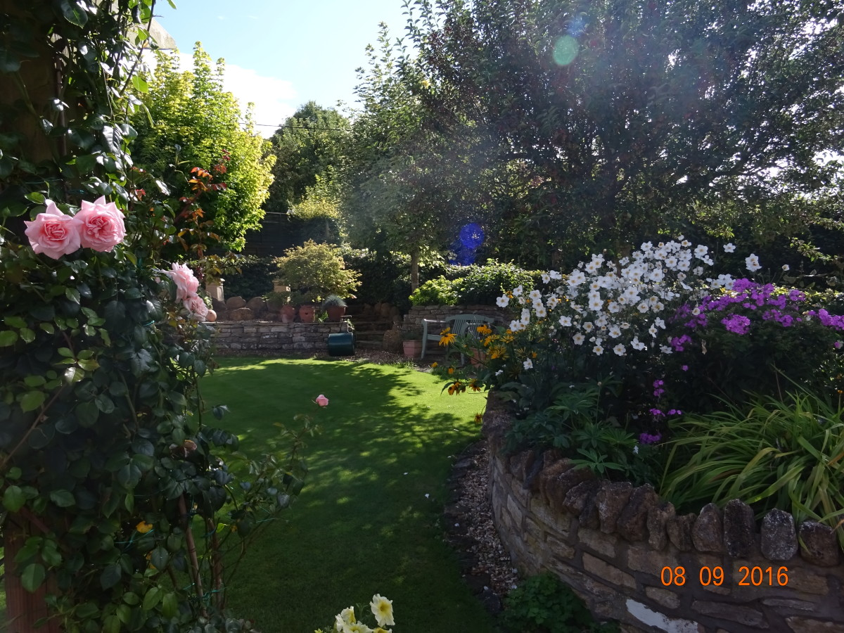 My sister's sheltered garden in South West England during early September