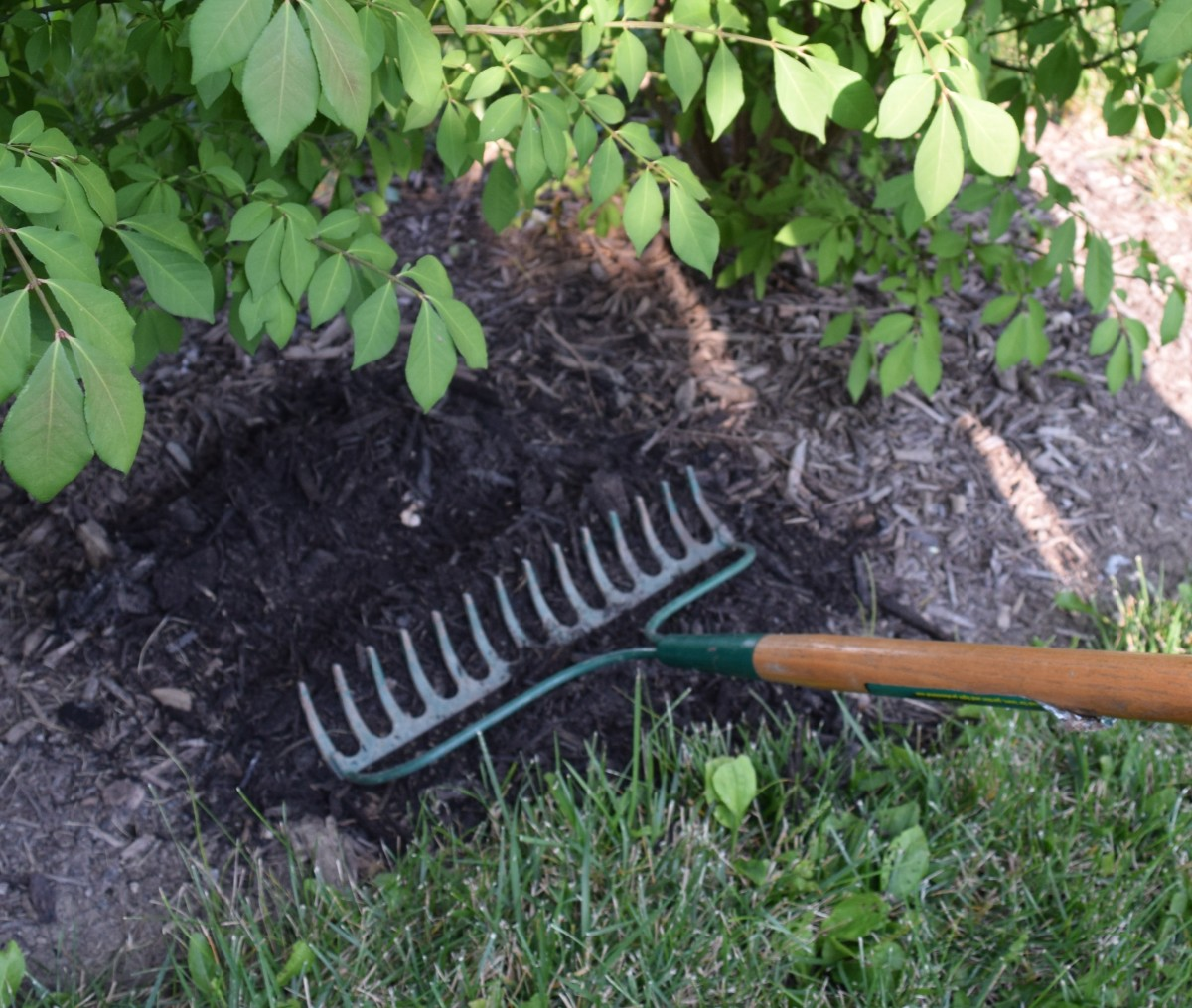Smoothing new mulch with the back of a rake.