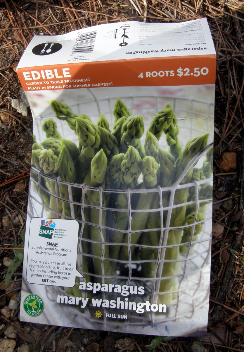 how-to-plant-two-year-old-asparagus-crowns-in-containers