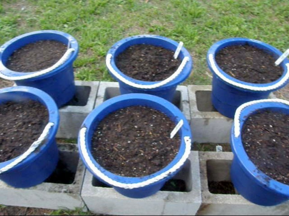 I place the containers on top of blocks to assist with drainage, and prevent root rot.