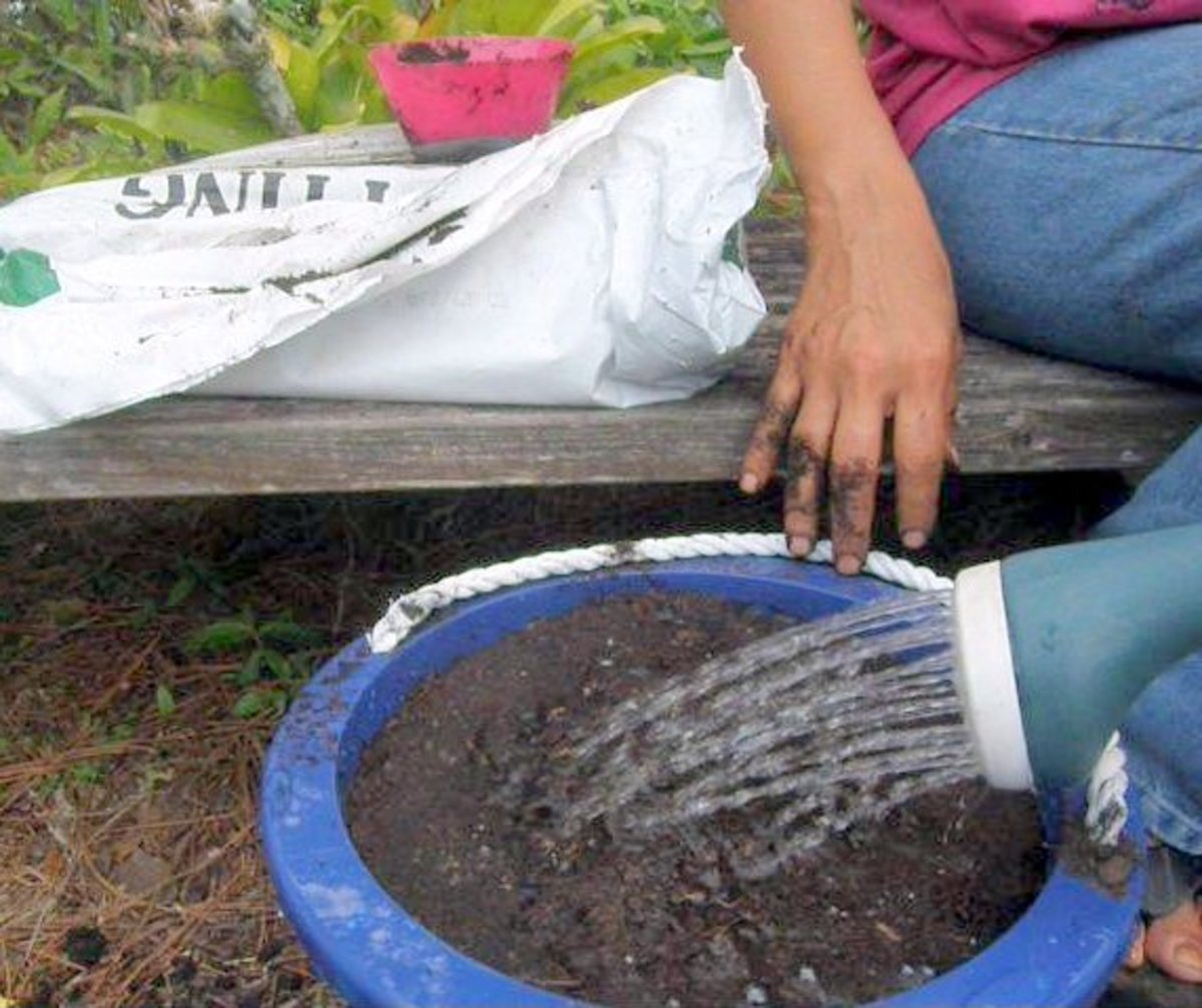 Water it thoroughly and keep the soil moist but not wet.