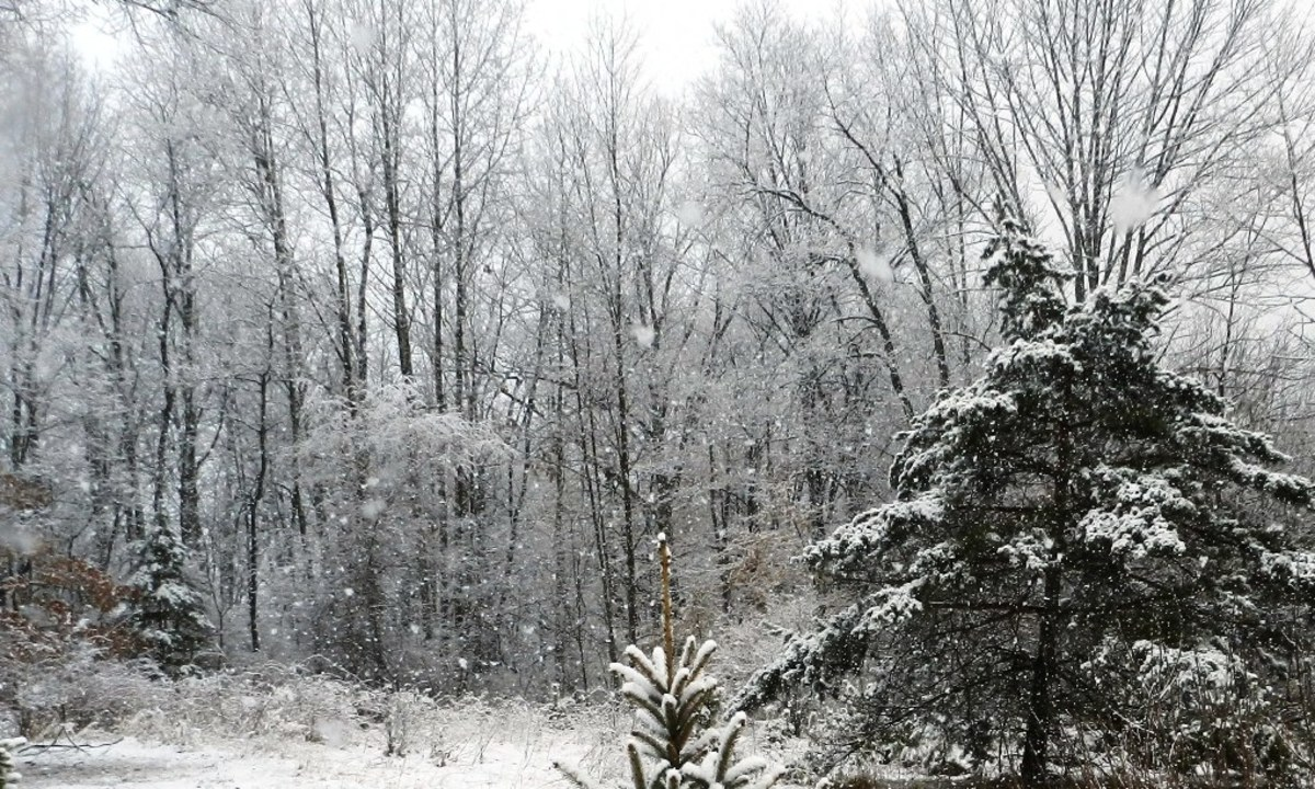 Heavy snows cause power outages in winter. Can you survive?