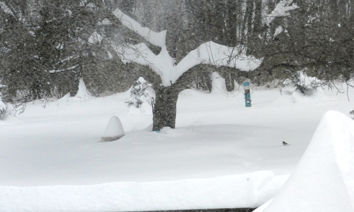 Snow load can break tree branches and down power lines.