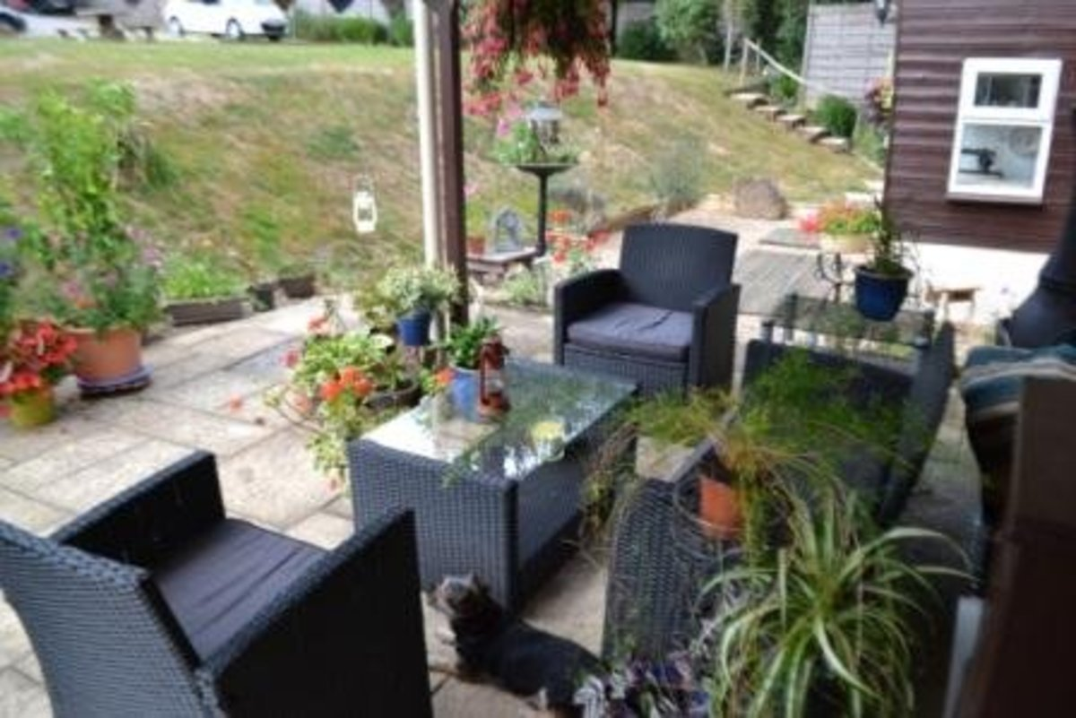 Even houseplants can go outside in the summertime.