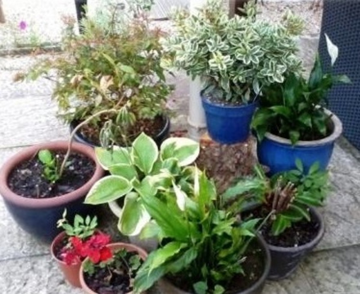 A selection of my beautiful plants.