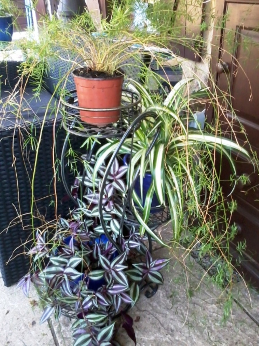 Houseplants provide variety and interest.