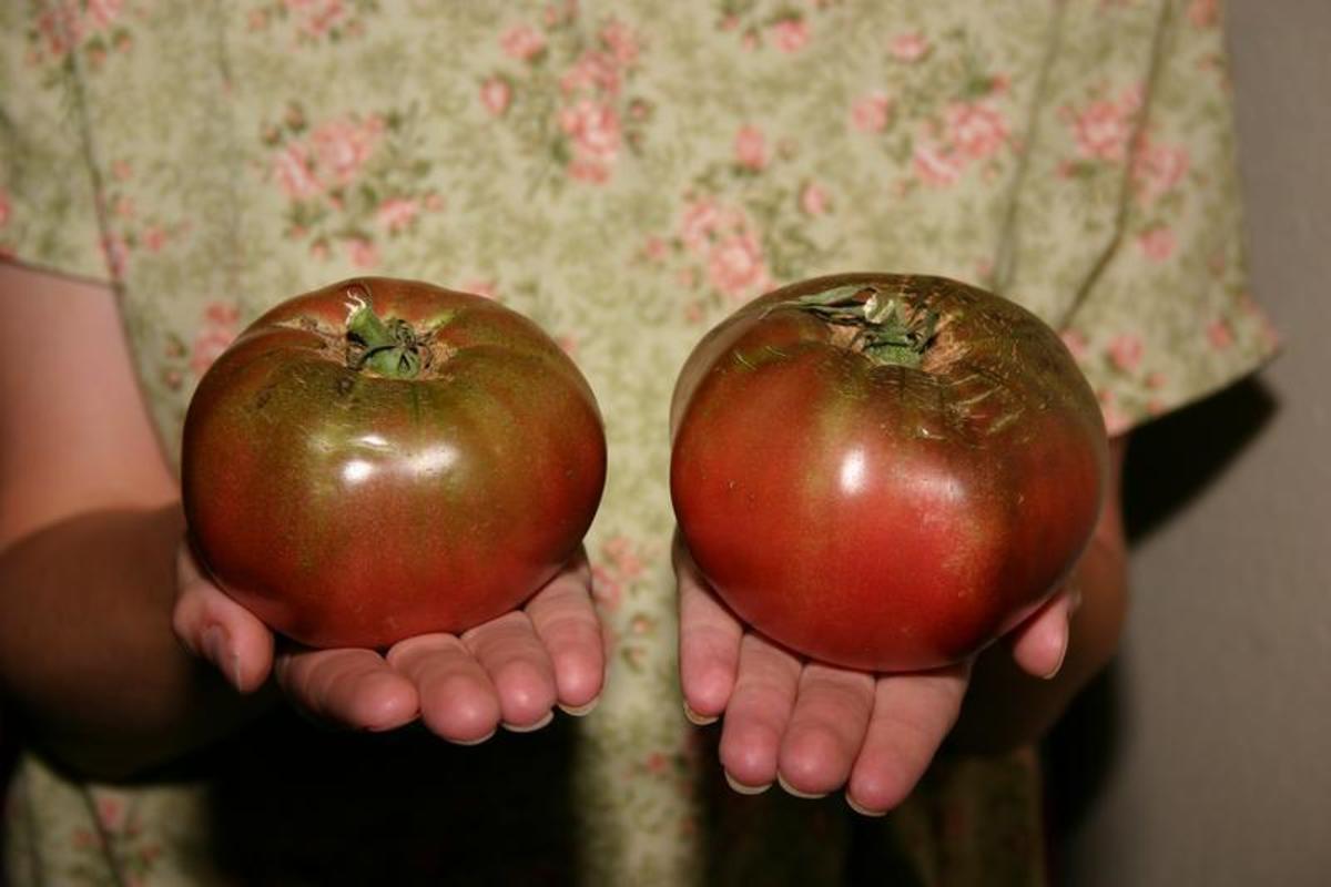 Cherokee Purple tomatoes.