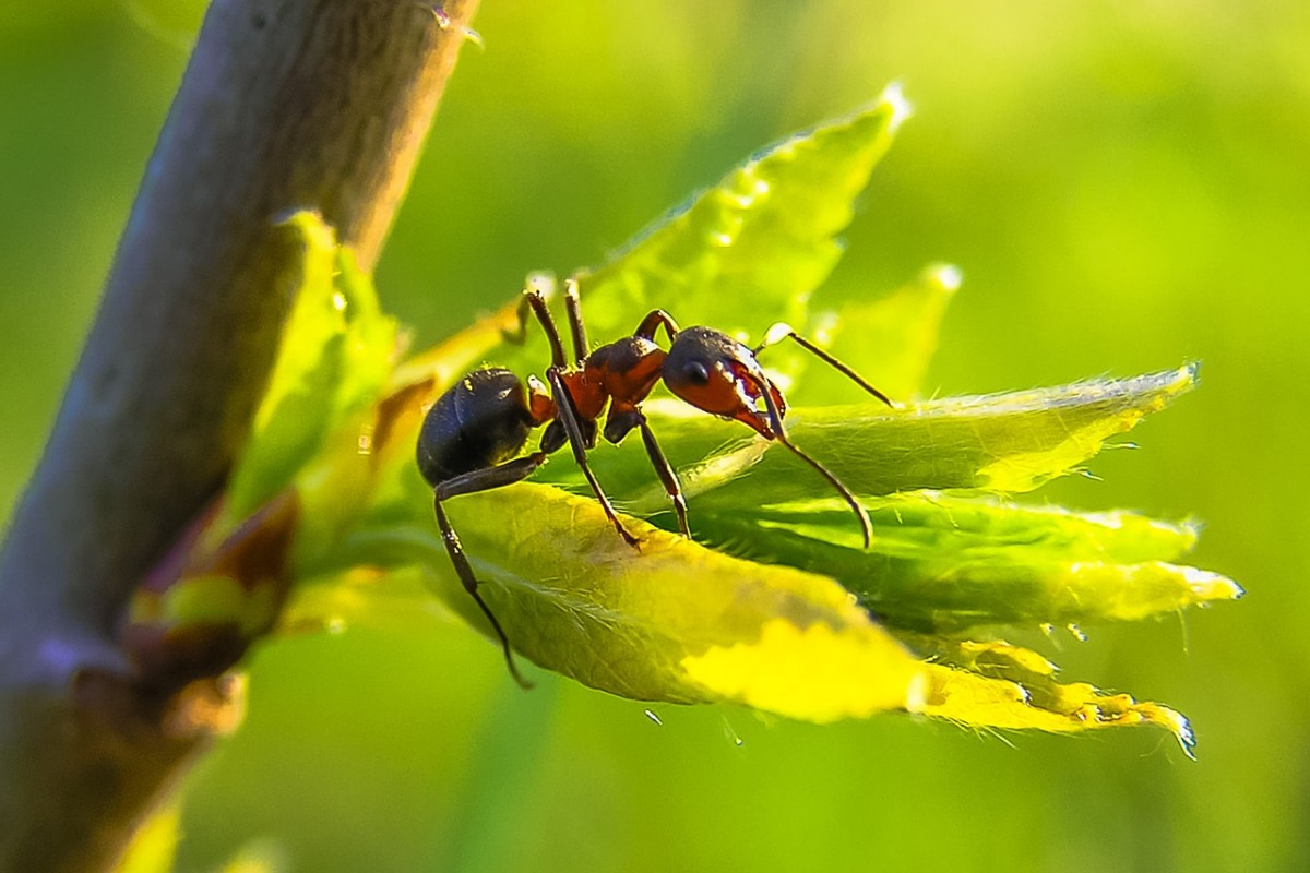 7 Natural Ways To Get Rid Of Ants How To Repel Ants Humanely Without Killing Them Dengarden Home And Garden