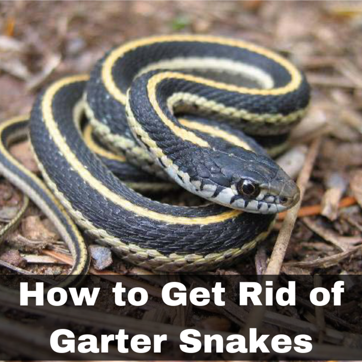 How to Get Rid of Garter Snakes Without Killing Them: 7 Tried-and-True Ways