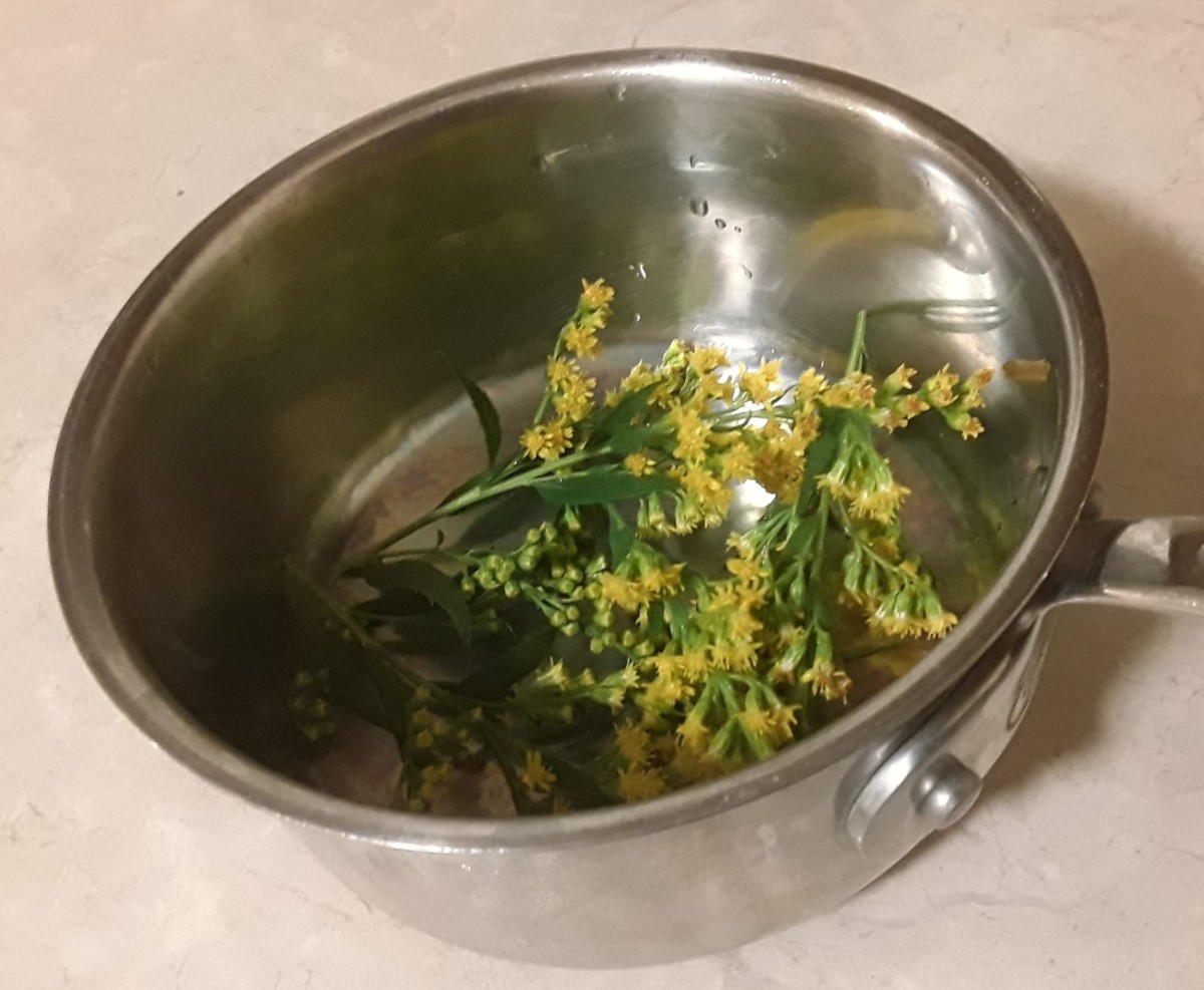 Goldenrod tea is very soothing for a cough.